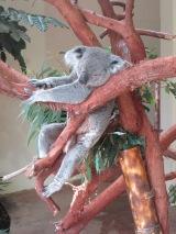 Riverbanks Zoo